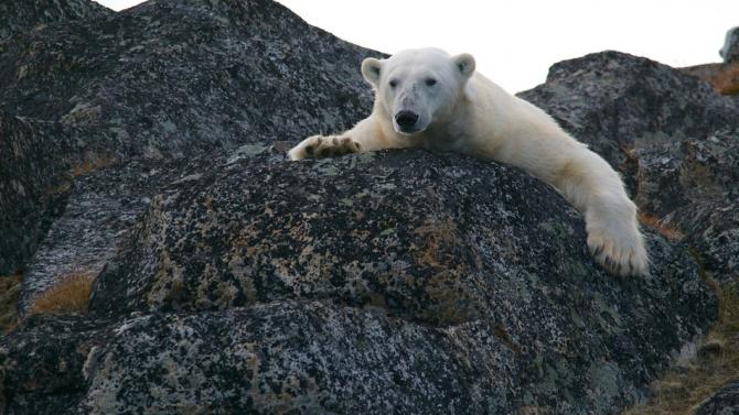 Глобалното затопляне е увеличило 600 пъти опасността от гореща вълна в Сибир