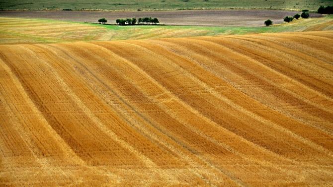 Жътвата на пшеницата в Добричка област завърши с прибрана реколта