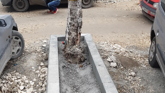 Бетонираха дърво в София, Фандъкова веднага взе мерки