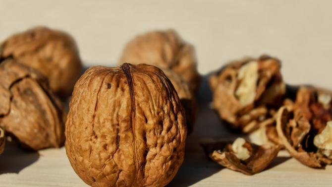 В сектора на черупковите плодове се наблюдава устойчив ръст, отчитат от земеделското министерство