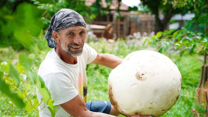Мъж намери пърхутка-гигант край село Воден