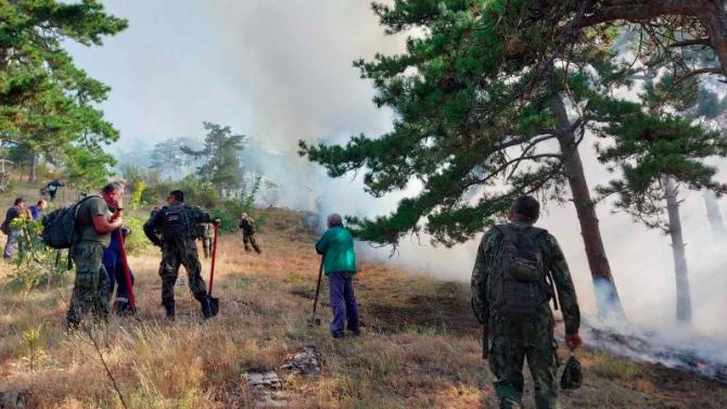 Щети на 35 декара гора е нанесъл пожарът край с. Дълбоки