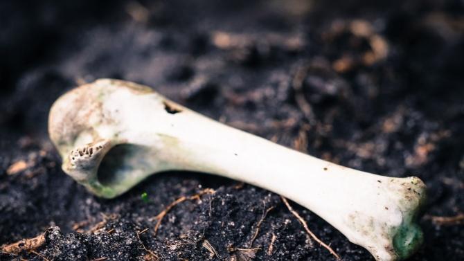 Намериха човешки кости в горнооряховското село Поликраище