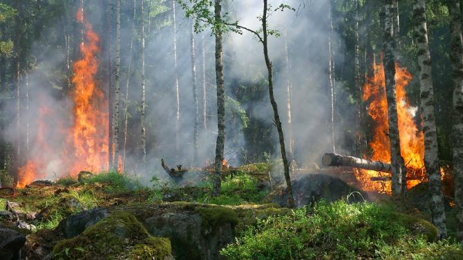 Португалия е в състояние на тревога заради опасност от горски пожари
