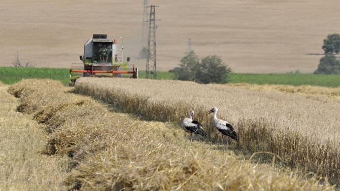 31-ви юли е крайният срок за подаване на заявления за ползване на земеделски земи за стопанската 2020 – 2021 г.