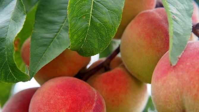 Отпускат 3,2 млн. лв. за изкупуване на български плодове и зеленчуци