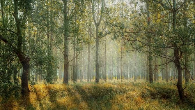 В община Харманли под закрила са поставени 115-годишни гори