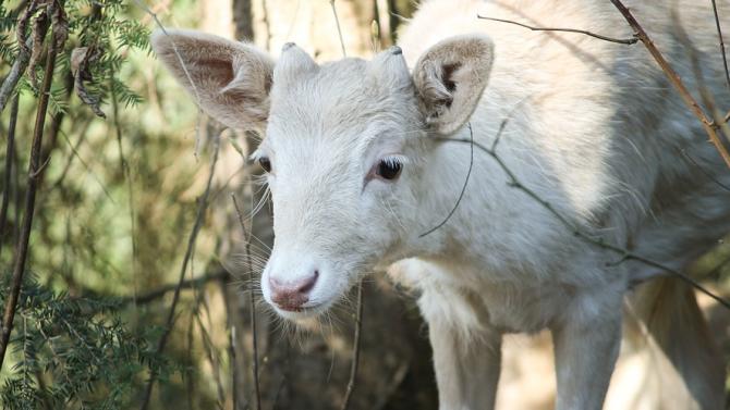 Зоопаркът във Варна отчита бум на бебета албиноси