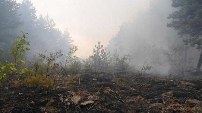 Два големи горски пожара бушуват в Хасковско