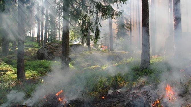 Локализиран е пожарът в Тополовградско, продължава ограничаването в Харманлийско