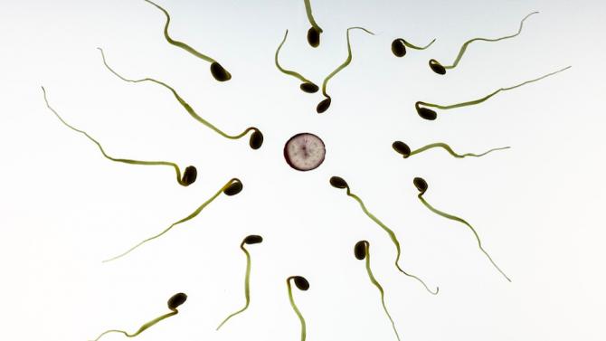 Учени установиха техниката на придвижване на сперматозоидите