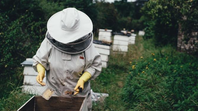 Кредити за над 500 000 лева получиха пчеларите по НПП