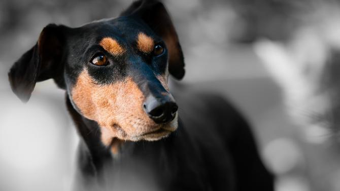 """През месец юли 101 кучета от приютите на ОП """"Екоравновесие"""""""