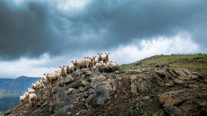 Мълния уби стадо от 20 овце в Хърватия