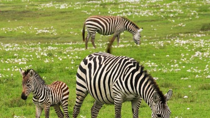 Тревопасните животни са най-застрашени от изчезване