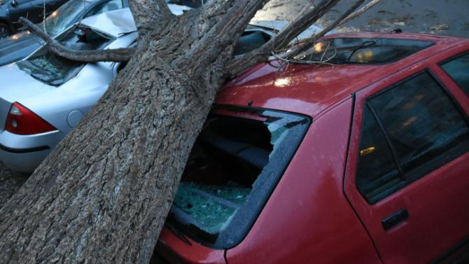 Шест автомобила пострадаха от паднало дърво в следствие на силен