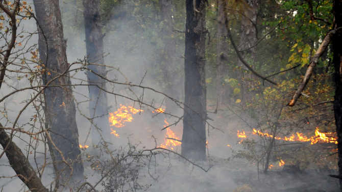 Гори борова гора в община Харманли, обмислят затваряне на път
