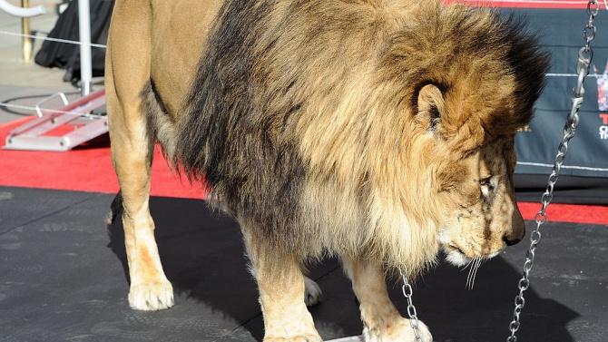 Нова мода по време на пандемия: Партита с тигри и лъвове по хълмовете на Холивуд