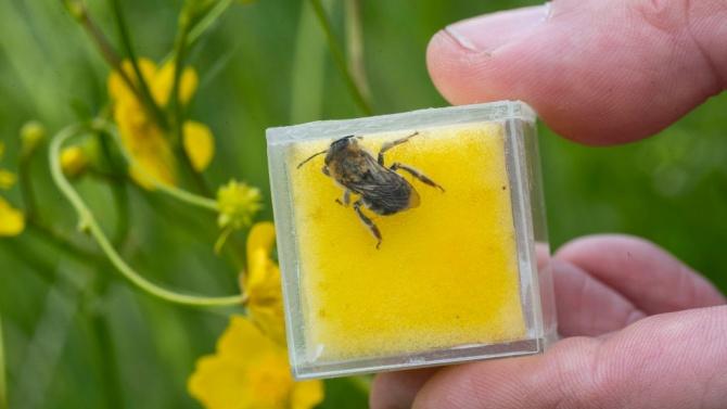 Животновъдите и пчеларите вече могат да кандидатстват по de minimis