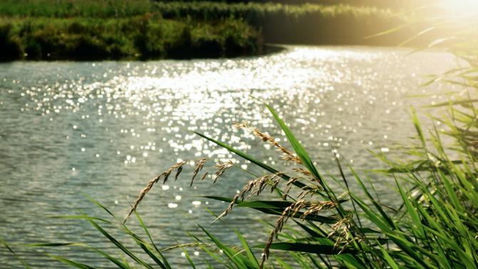 Започна почистването на коритото на река Бели Лом в границите