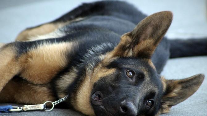 Полицейско куче надуши четвърт милион евро за няколко дни в