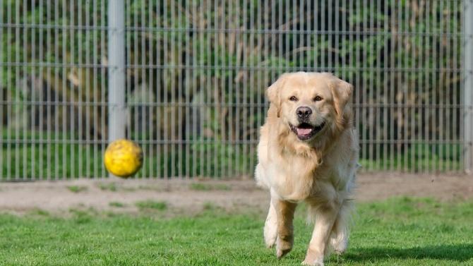 В Приюта за бездомни животни в Разград вече има площадка за разходка на кучета