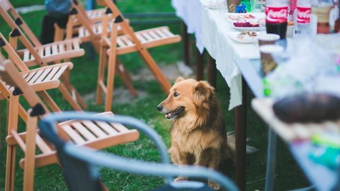 Кучетата се плашат по-малко от фойерверки, ако са израснали с други себеподобни