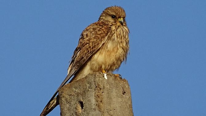 """Екип на Спасителния център на """"Зелени Балкани"""" е освободил 13 птици днес в столицата"""