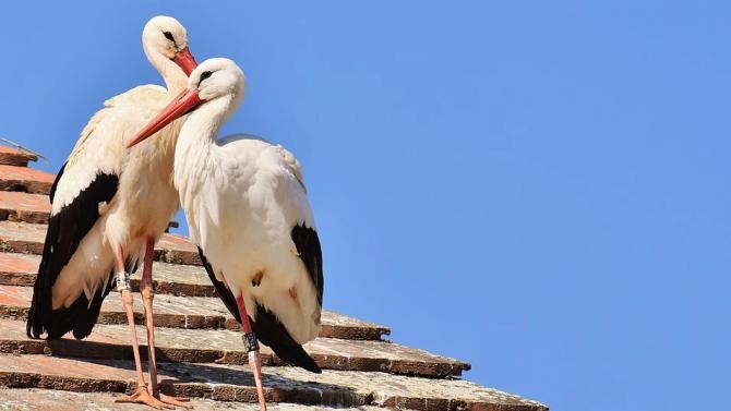 Спасителният център за диви животни освободи 20 бели щъркела днес