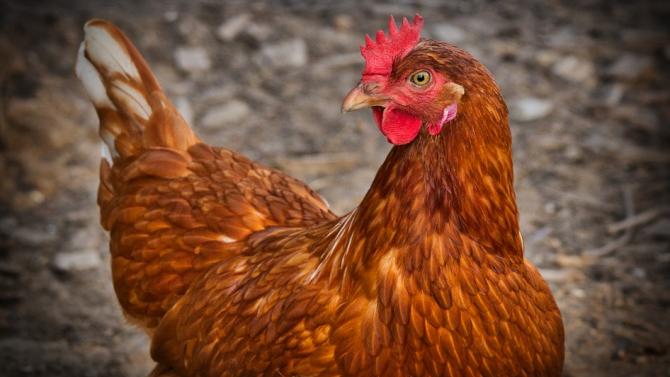 54-годишна жена се мисли за кокошка