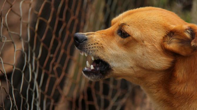 Куче нахапа жестоко 6-годишно дете