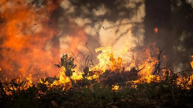 Гасиха запалени десетки декари със сухи треви и храсти в Русенско