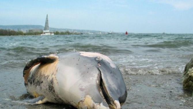 Мъртви делфини са открити по бреговете на Мавриций