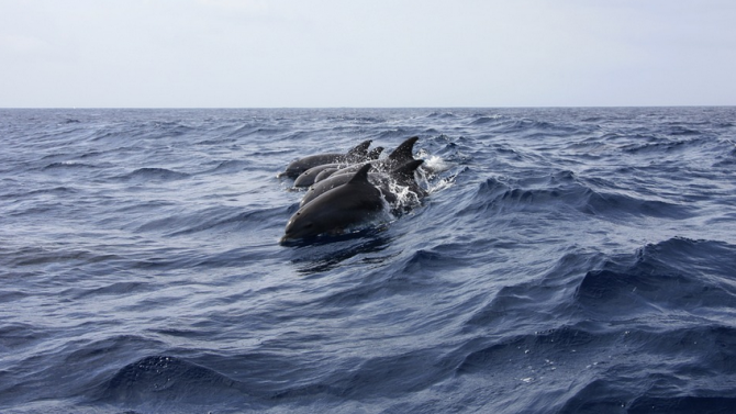 Делфините край Мавриций не са умрели заради петролния разлив