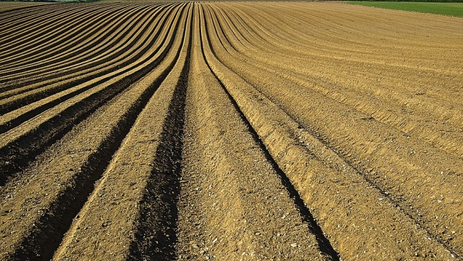 Реколтирани са 95 на сто от засетите площи с пшеница в Пернишко