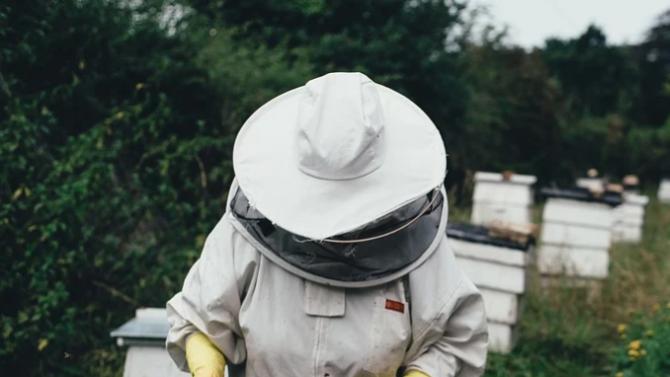 ДФЗ изплати над 4, 132 млн. лв. на пчеларите по de minimis
