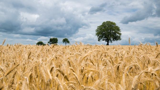 С помощ от 56,6 млн. лв. ще се подобри ликвидността на земеделски стопанства