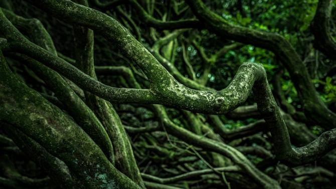 Откриха гора, погребана от вулкан преди 10 млн. години в Перу