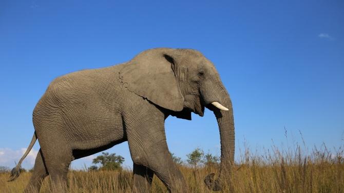 Мистериозна смърт на слонове в Зимбабве