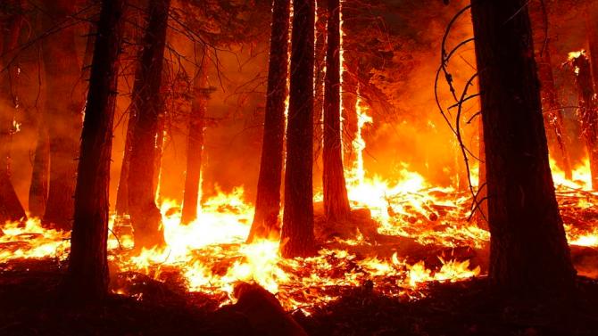 Най-старият природен парк в Калифорния е прекалено опасен за посетители заради бушуващи пожари