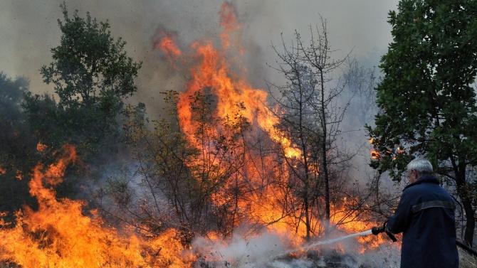 Пожар гори в над 500 декара смесена гора в землището на Българаново
