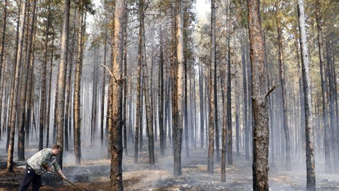 Пожарът в гората край омуртагското село Българаново е потушен