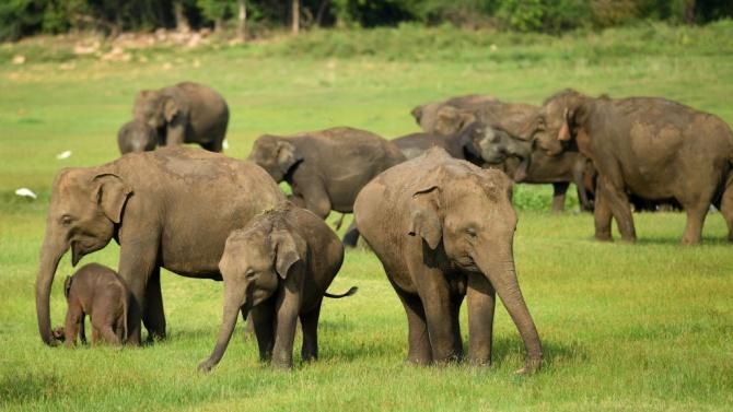Защо умират слоновете в Зимбабве?