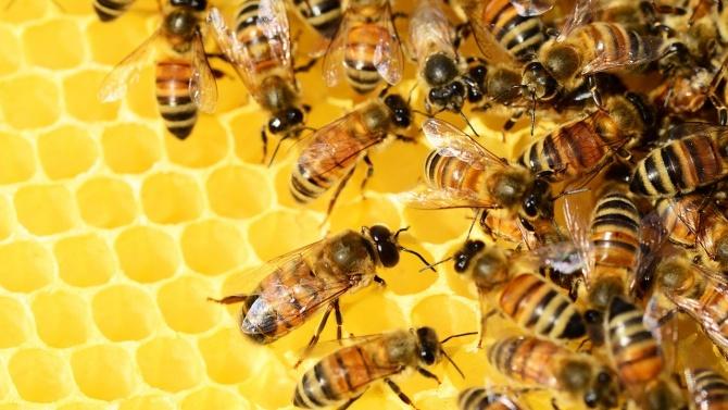 БАБХ проверява сигнал за пчелни кошери