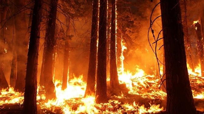Трети ден продължава гасенето на пожара в гората край село Граматиково