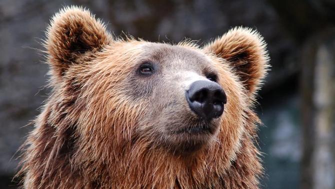 На 17 септември общинските музеи и столичния зоопарк - с вход свободен