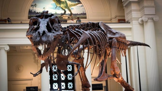Скелетът на един от най-добре запазените екземпляри на Тиранозавър рекс