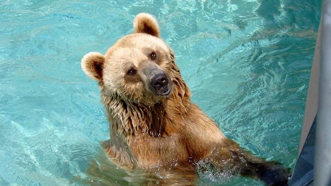Мъж от Масачузетс получи изненадващо събуждане от мечка