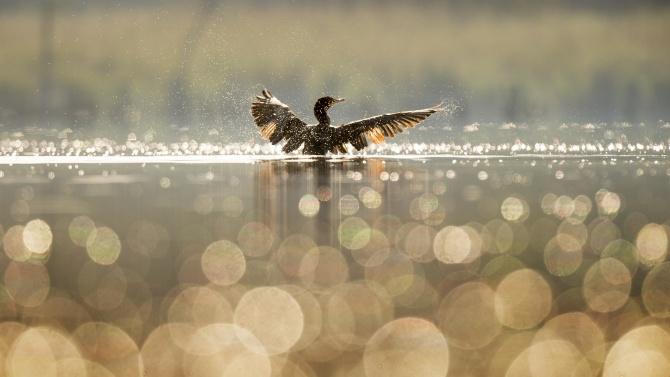 Преустановено е замърсяването на Варненско езеро
