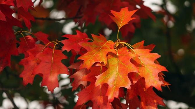 На 22 септември настъпва астрономическата есен